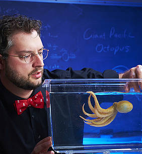 Kirt Onthank, assistant professor of biology, wearing a red and white polka dot bow tie, plays with one of the octopuses he studies.