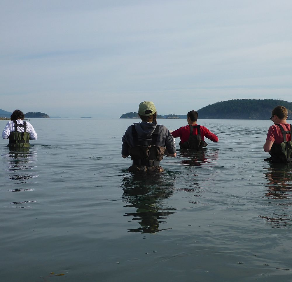 Four college students wading through a bay